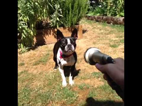 dog vs water hose