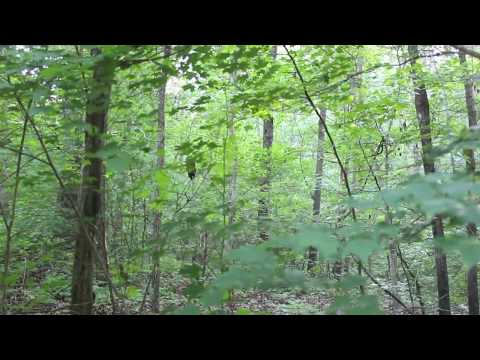 Screaming Sounds In The Woods, Rocks Thrown At Camera - Georgia, 2013