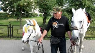 лошадки ВДНХ