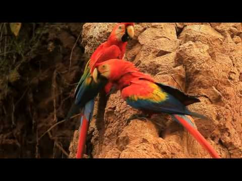 Beautiful parrot species, scarlet macaws, rainbow lorikeets, African grey, cockatoo birds and more