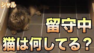 留守中、猫は何してる?寝てるだけかと思ったらまさかの…!!!可愛すぎてYABEEEEEEE!!!
