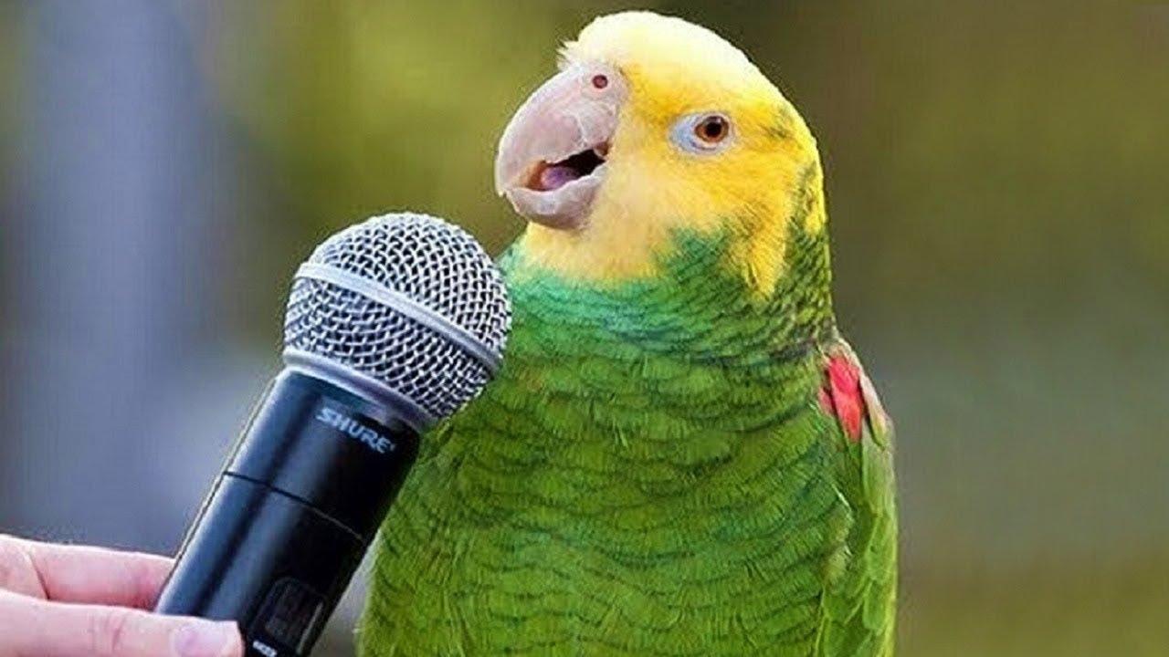 10 أنواع مدهشة من الطيور تتكلم مثل البشر تماماً !!