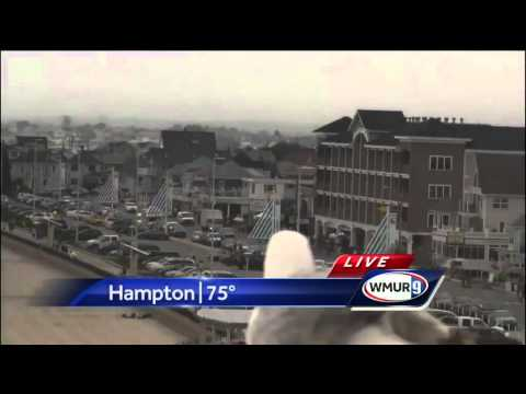 Seagull rudely interrupts Kevin Skarupa's live forecast - YouTube