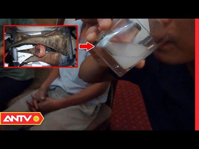 Thực hư việc chữa bệnh tăng cường sức khỏe bằng vẩy tê tê, sừng tê giác | An toàn sống | ANTV