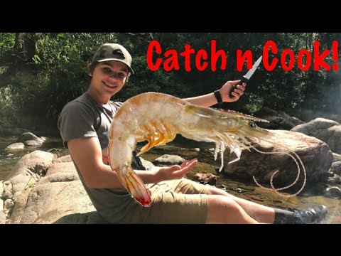 Primitive DIY Prawn Trap - Catch n Cook!