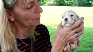 Nevada: Cocker Spaniel Puppy With Lynn Fortheanimals Rescue Squad