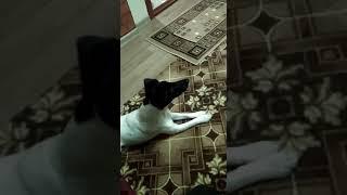 Джесс смотрит фильм три танкиста и собака