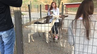 Smoky Mountain Deer Farm and Exotic Animal Petting Zoo