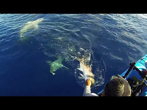 Shark Week 2017: THE TRUTH About Shark Fishing
