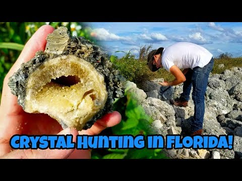 Crystal Hunting In Florida For Calcite Geodes In Fossil Shells 🐚⛏