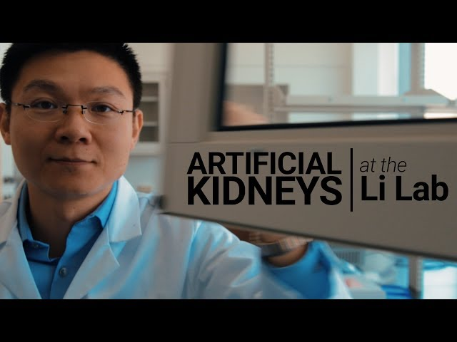 USC Stem Cell scientist Zhongwei Li is writing a recipe for a kidney