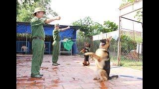 Sài Gòn Dog-Trung tâm huấn luyện chó uy tín tại Sài Gòn