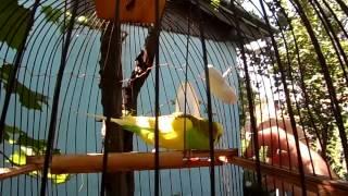 Мелок для волнистого попугайчика. Уход за попугаями.