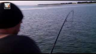 Fishing / Pesca da Corvina no Tejo