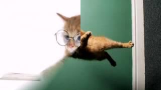 Кошки бывают разные.