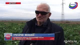 В Дагестане презентовали новые сорта капусты