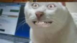 Migliori Video Di Gatti Divertenti E Pazzi 3parte