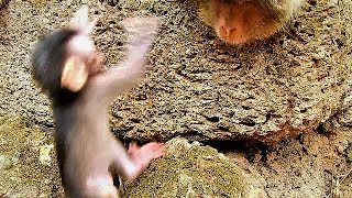 Oh My God! Pity Baby Maci fall down from the stone, Merri try to catch Maci up so heard.