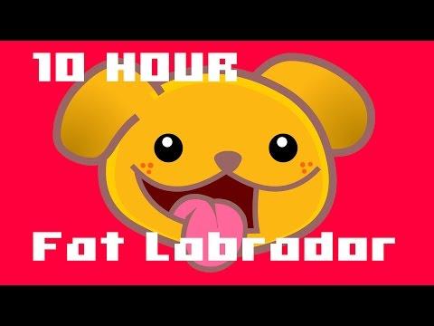 Fat Labrador : 10 Hours