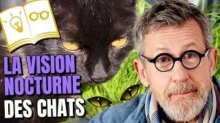😺 Comment les chats font-ils pour voir dans l'obscurité ? 👀 #ChezJamy - Confinement Jour 42