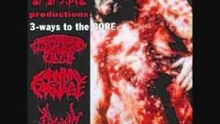 Vivisection - Maggots Guts