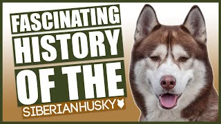 The History Of The Siberian Husky