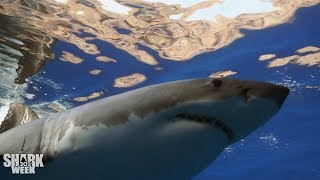 The Top 30 Sharks of Shark Week: Part Two