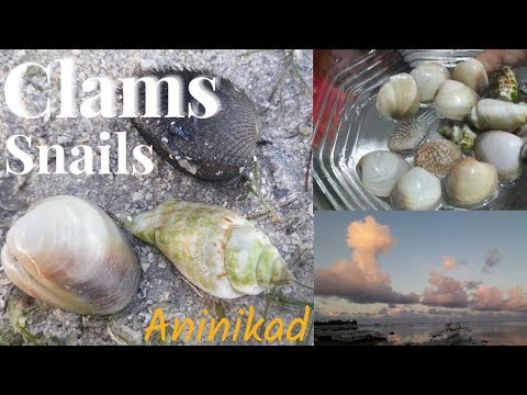 How To Get Clams: Coastal Foraging, Getting Some Shellfish And Sea Snails