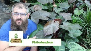 philodendron