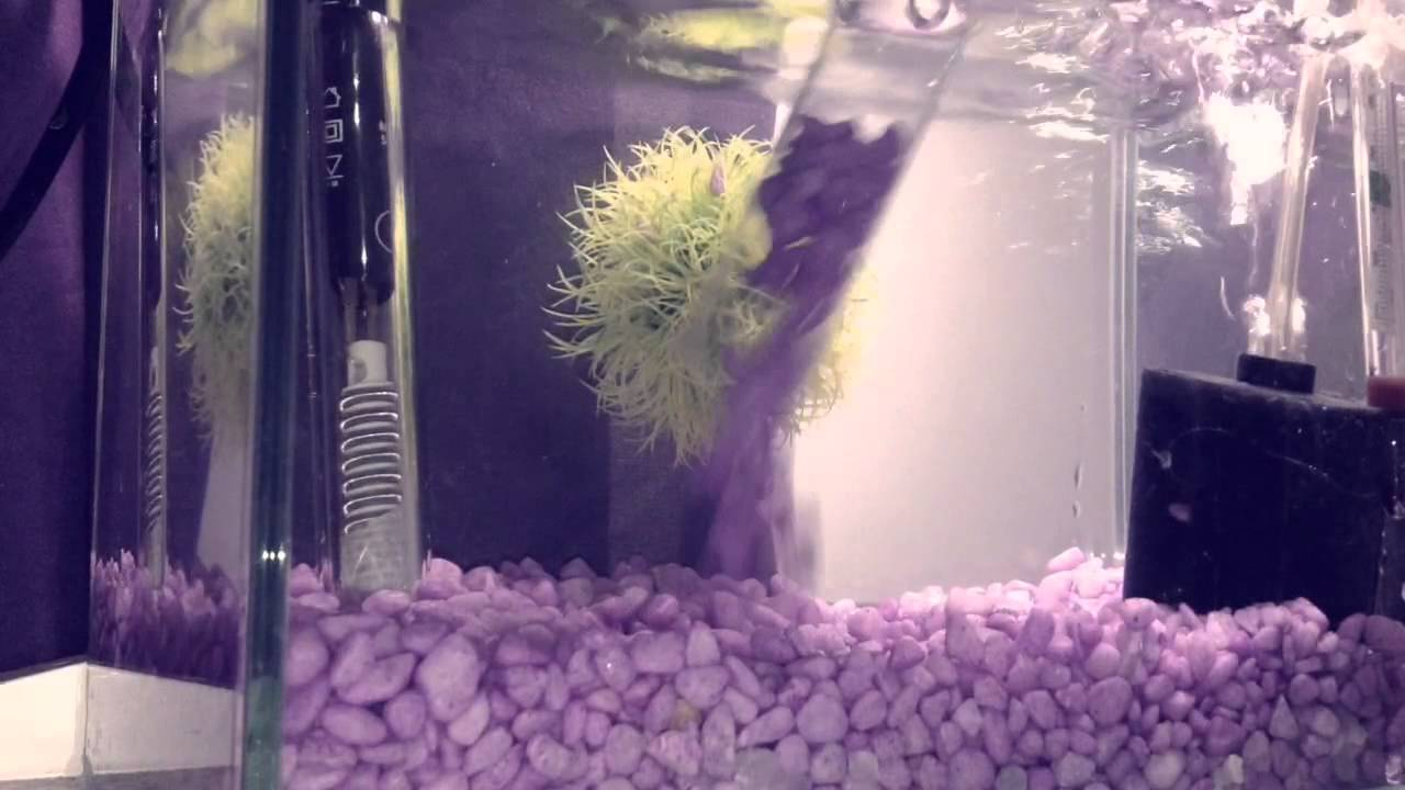 how to syphon a fish tank