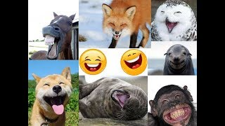 Cute Funny Animals Compilation 2018 Carnival of Animals -TRY NOT TO LAUGH