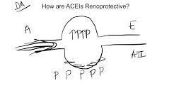 ACEI-Renoprotective