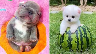 Baby Dogs 🔴 Cute and Funny Dog Videos Compilation #9 | 30 Minutes of Funny Puppy Videos 2021