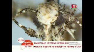 Интересное открытие! Новые виды животных