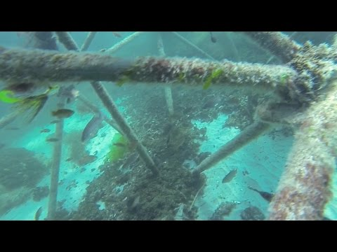 Spearfishing Clear Water NJ Shore 7/25/14