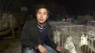 S. Korea: Pet dogs turning into Boshintang (Dog Meat Soup) Shocking scene of a dog farm
