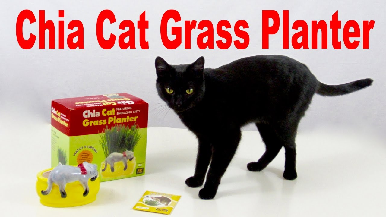 CHIA CAT - Grass Planter - Cats LOVE It! ✅ - П�� CHIA CAT - Grass Planter - Cats LOVE It! œ� - YouTube