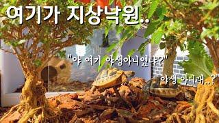 육지거북이 초대형 사육장 꾸미기 세팅하기야생느낌원스팜