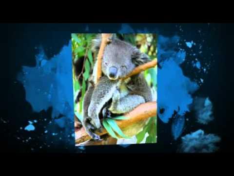 Wiradjuri Animals (W1)