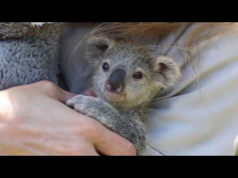 Joe Daily - Joe & Michelle's Positivity Monday - Meet Elsa the Baby Koala