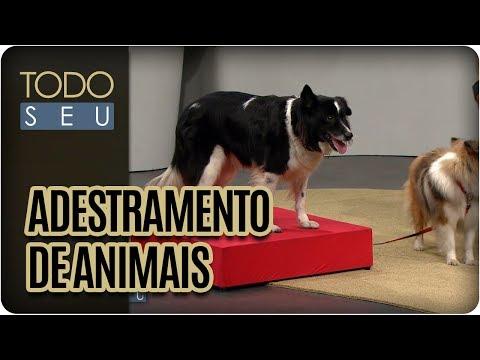 Adestramento De Animais | Como Treinar Seu Pet?  - Todo Seu (26/07/17)
