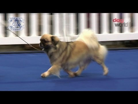 Manchester Championship Dog Show 2013 - Utility group
