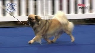 Manchester Championship Dog Show 2013  Utility group