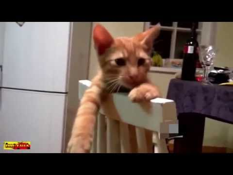 Funny dogs ,Funny Cat      Animals Funny videos  2016