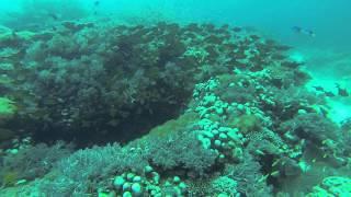 Diving at Pemba Island - ペンバ島でダイビング
