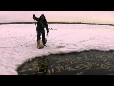 Alberta Fish Kill Could Be Worst Ever