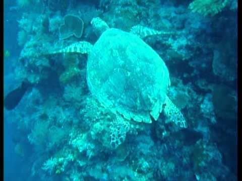 07-18-10 Saeis Corner, Scuba Dive, Palau