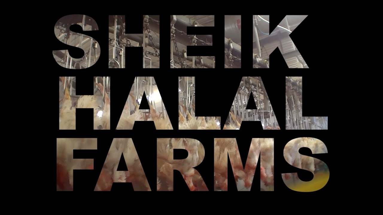 Sheik Halal Farms Investigation