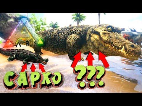 САМЫЙ ОГРОМНЫЙ КАЙМАН - Парк Динозавров - ARK Survival Evolved #3