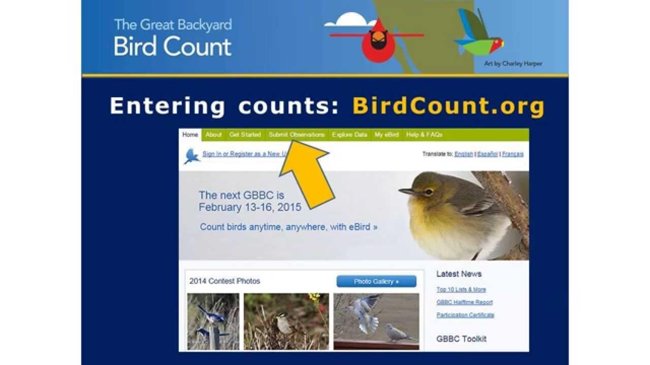 2015 great backyard bird count youtube